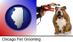 Chicago, Illinois - a dog being groomed with a comb and a hair dryer