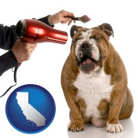 california map icon and a dog being groomed with a comb and a hair dryer