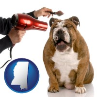 mississippi a dog being groomed with a comb and a hair dryer