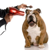 a dog being groomed with a comb and a hair dryer